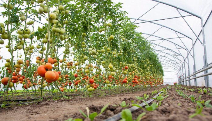 The Mission for Integrated Development of Horticulture (MIDH)